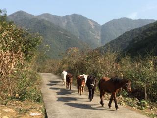山から馬が下りてきました