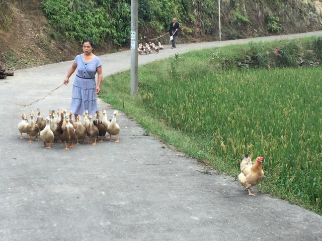 家畜の飼育は大変