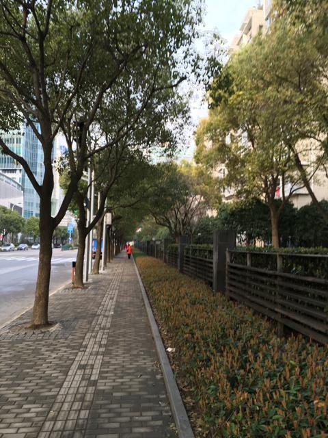 風が強くて寒い、初春の上海の朝でした